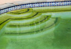 Rimedi acqua verde in piscina